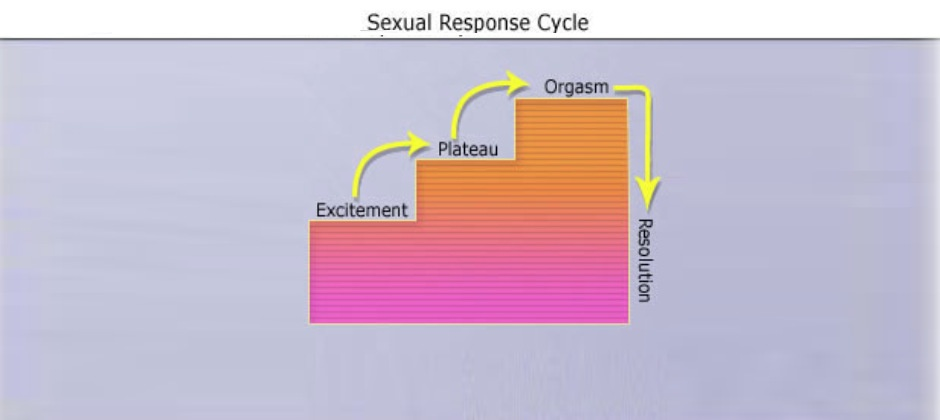 Stages of Male Sexual Response