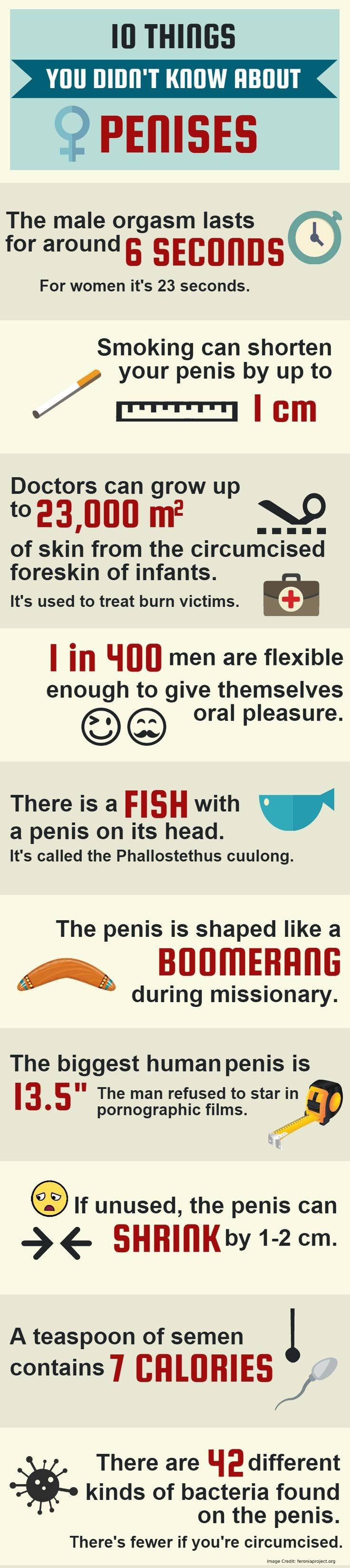 Penis 10 Things Info