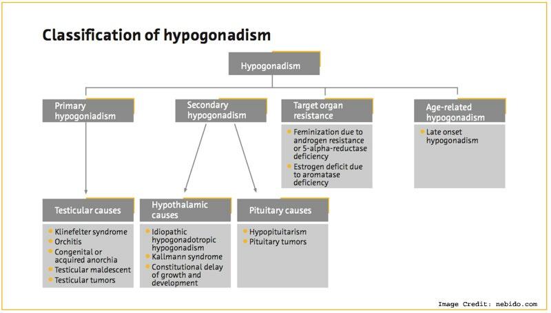 Hypogonadism Info