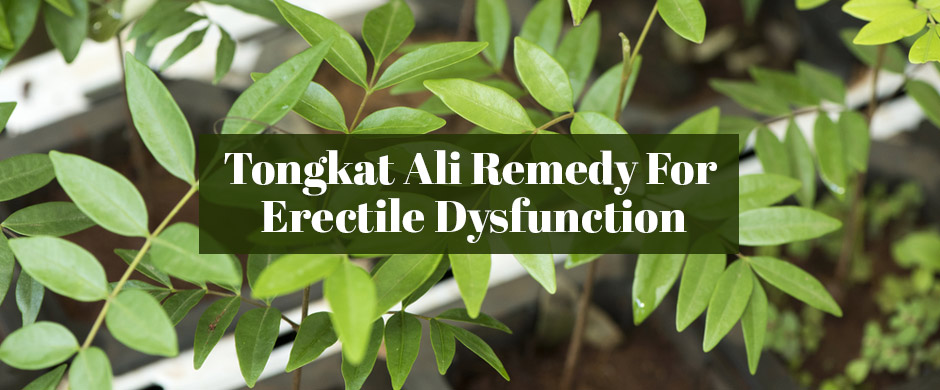 Why Is Tongkat Ali The Most Effective Remedy For Erectile Dysfunction?