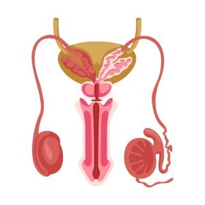 ejaculatory disorders